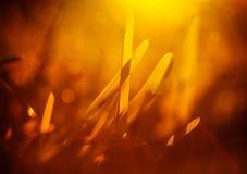 Erba fresca nella luce gialla Fotografie Stock
