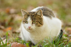 Foto del primo piano di un gatto Fotografia Stock