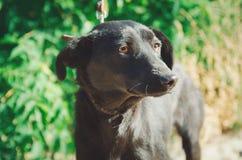 Foto del retrato del primer de un perro mestizo adorable fotografía de archivo