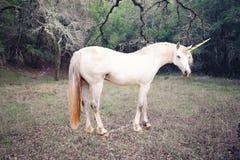 Foto del unicornio realista imagen de archivo libre de regalías