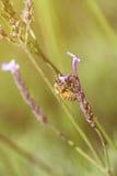 Foto del vintage de la flor salvaje con la abeja en el jardín Fotografía de archivo libre de regalías