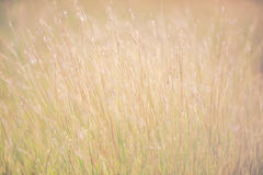 Foto del vintage de la hierba de las flores Imágenes de archivo libres de regalías
