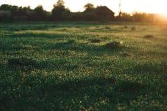 Foto del vintage de la hierba verde oscuro fotografía de archivo libre de regalías