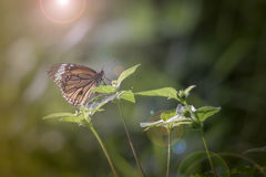 Foto del vintage de la mariposa Imagenes de archivo