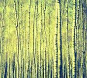 Foto del vintage de los troncos de árbol de abedul Imágenes de archivo libres de regalías