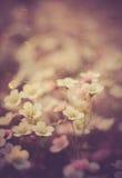 Foto del vintage de pequeñas flores hermosas Útil como fondo Fotografía de archivo