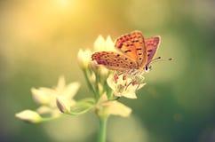 Foto del vintage de una mariposa que descansa sobre wildflower Fotografía de archivo libre de regalías