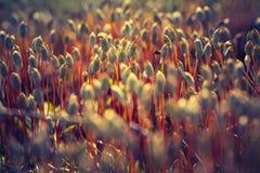 Foto del vintage del musgo floreciente del bosque Imagen de archivo libre de regalías