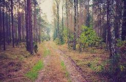 Foto del vintage del paisaje del bosque Imagenes de archivo