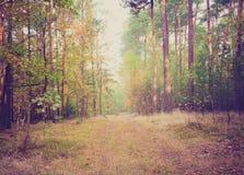 Foto del vintage del paisaje del bosque Fotografía de archivo