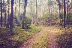 Foto del vintage del paisaje del bosque Imagen de archivo libre de regalías