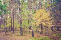 Foto del vintage del paisaje del bosque Fotos de archivo