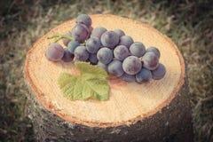 Foto del vintage, uvas con la hoja en tocón de madera en jardín el día soleado Imagenes de archivo
