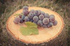 Foto del vintage, uvas con la hoja en tocón de madera en jardín el día soleado Imagen de archivo
