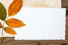 Foto del vintage y hojas de otoño en blanco Imagenes de archivo