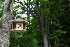 Foto dell'aviario di legno casalingo nella foresta Fotografia Stock Libera da Diritti