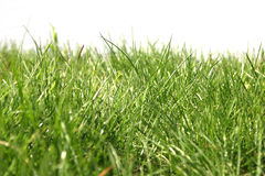 Foto dell'erba verde Fotografia Stock Libera da Diritti