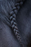Foto della criniera del cavallo con la treccia Fotografie Stock
