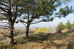 Foresta sull'alta riva del fiume Fotografie Stock