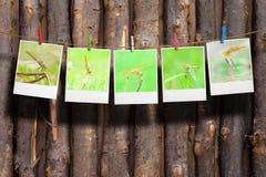 Foto della libellula Fotografia Stock Libera da Diritti