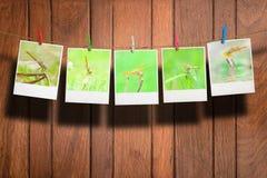 Foto della libellula Fotografie Stock