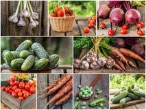 Foto della miscela di verdure variopinta Concetto dell'alimento Immagini Stock Libere da Diritti