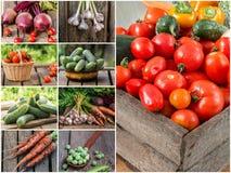 Foto della miscela di verdure variopinta Concetto dell'alimento Fotografia Stock