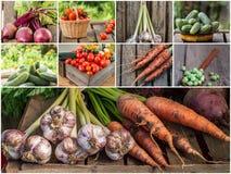 Foto della miscela di verdure variopinta Concetto dell'alimento Immagine Stock
