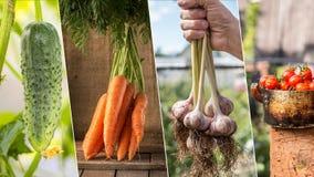 Foto della miscela di verdure variopinta Concetto dell'alimento Fotografia Stock Libera da Diritti