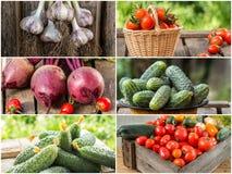 Foto della miscela di verdure variopinta Concetto dell'alimento Fotografie Stock Libere da Diritti