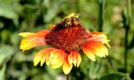 Foto della natura con i fiori e le piante Fotografia Stock Libera da Diritti