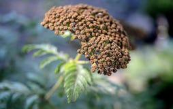 Foto della natura con i fiori e le piante Immagini Stock Libere da Diritti