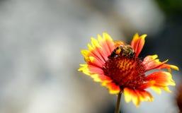 Foto della natura con i fiori e le piante Fotografie Stock Libere da Diritti