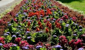 Foto della natura con i fiori e le piante Immagine Stock Libera da Diritti