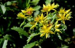 Foto della natura con i fiori e le piante Fotografie Stock
