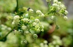 Foto della natura con i fiori e le piante Fotografia Stock