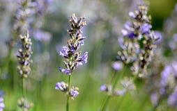Foto della natura con i fiori e le piante Immagini Stock