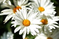 Foto della natura con i fiori e le piante Immagine Stock