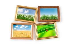 Foto della natura nei telai Immagini Stock