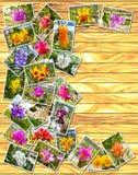 Foto della pila delle orchidee Fotografia Stock Libera da Diritti