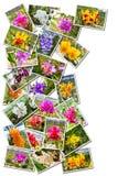 Foto della pila delle orchidee Immagini Stock