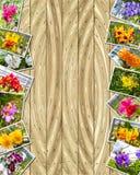 Foto della pila delle orchidee Fotografie Stock