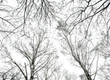 Foto della priorità bassa astratta degli alberi immagine stock