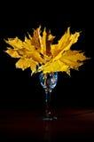 Foto delle foglie di acero gialle isolate su fondo nero Immagine Stock