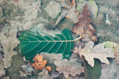 Foto delle foglie di autunno su acqua al fondo del lago Fotografie Stock Libere da Diritti