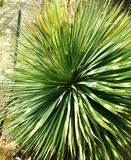 Foto delle piante esotiche Fotografia Stock Libera da Diritti