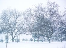 Foto delle precipitazioni nevose nel parco Orario invernale fotografia stock