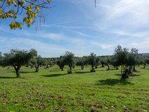 Foto der Bäume lizenzfreie stockfotos