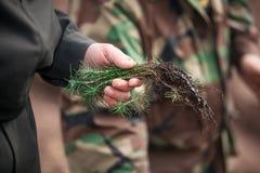 Foto der Hand die Sprösslinge mit einen Jahrbäumen halten ausgegraben vom Boden Stockfotografie