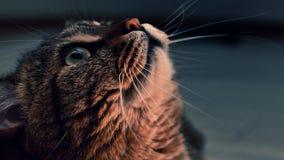 Foto der Katze auf einem dunklen Hintergrund Stockfotografie